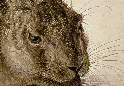 Bimago Obraz Hare 53869