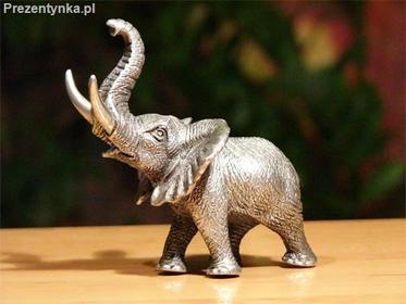 Veronese Cynowy słoń