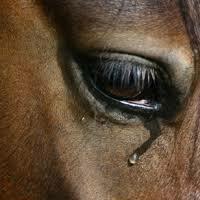 Stop rzeźni dla koni i innych zwierząt!