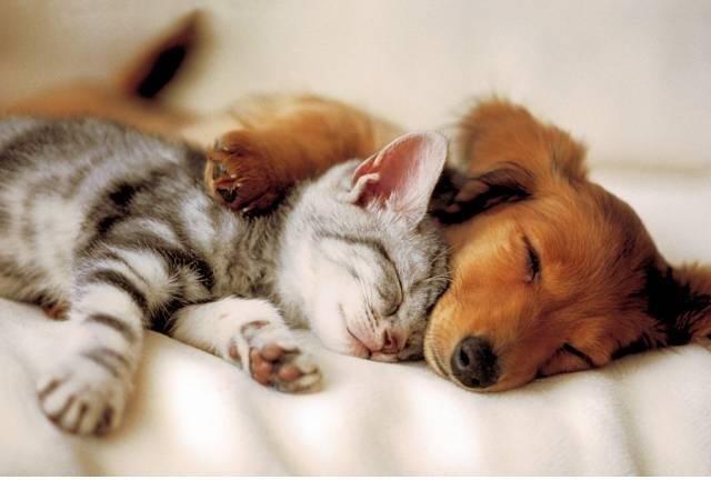 ♥Klub miłośników zwierząt♥