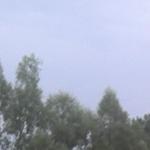 Koniara3535