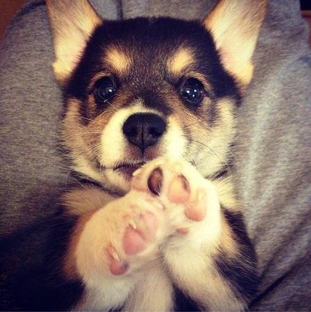 Zajefajni Psiarze którzy ponad życie kochają psy !