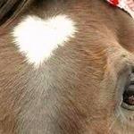 Pasjonat koni