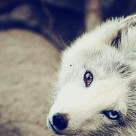 Biały Wilk ☽