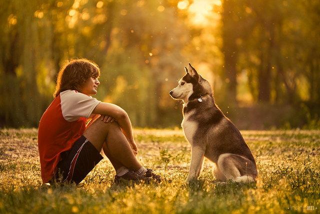 Dogomania - Z miłości do Pieskości