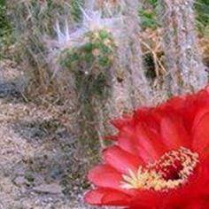 kaktus48
