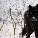 wolfwoman♥