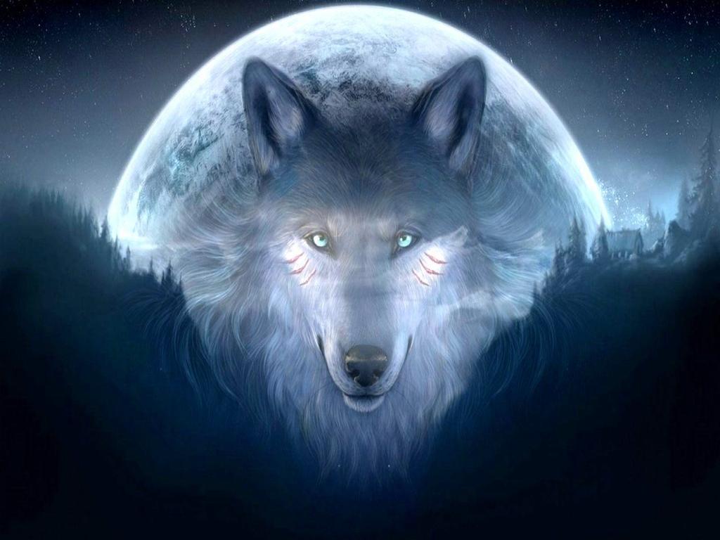 Fani Wilków