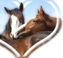 ♥♥J'adore les chevaux♥♥