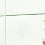 Lana 모니카