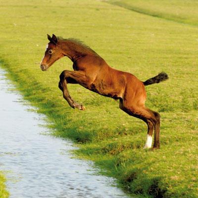 Koń - nasz przyjaciel od wieków