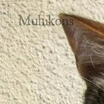 Muhikons