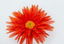 kwiaty sztuczne - Akces I. J. Ostrowscy Sp.... zdjęcie 13