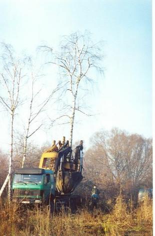 pielęgnacja drzew - Zakład Kształtowania i Pi... zdjęcie 15