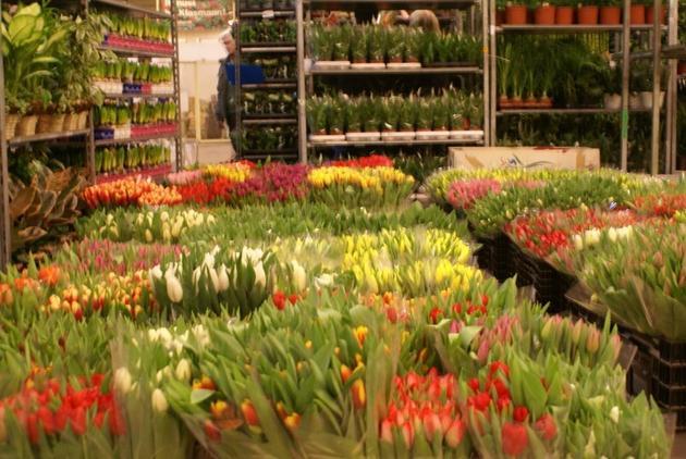 kompozycje kwiatowe - Dolnośląskie Centrum Hurt... zdjęcie 3