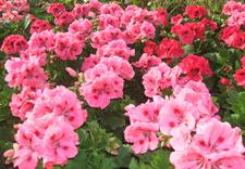 gospodarstwo ogrodnicze
