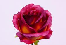 kwiaty sztuczne hurtownie - Akces I. J. Ostrowscy Sp.... zdjęcie 16