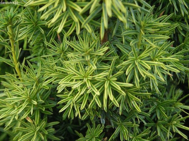 środki ochrony roślin - Szkółka Roślin Ozdobnych ... zdjęcie 12