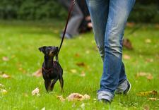 przedszkole dla psów warszawa - Akademia Psorbona zdjęcie 5