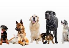 czterylapki, akcesoria dla zwierząt