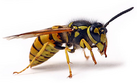 Abc Insekt