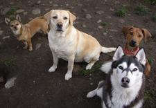 hotel dla zwierząt - Hotel dla psów Ta Bajka zdjęcie 3