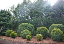 cięcie drzew i krzewów - Ogrody Barw zdjęcie 17