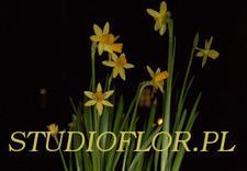 doniczkowe - Tajemniczy Ogród - kwiaci... zdjęcie 5