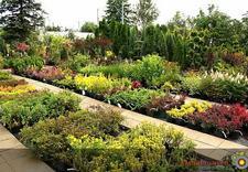 Byliny, drzewa i krzewy, rośliny doniczkowe