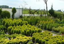 serwis - Centrum Ogrodnicze Aronia zdjęcie 4