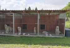 Weterynarz, lecznica dla zwierząt