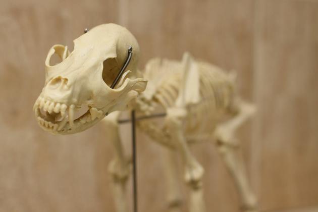 sterylizacja psów - Klinika Weterynaryjna Kor... zdjęcie 10