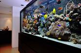 P.N.AQUAGROUPA zakładanie akwarium