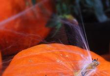 dekoracje Halloween - Urodzinki.pl zdjęcie 14
