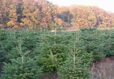 terenów zielonych - Zakład Kształtowania i Pi... zdjęcie 31