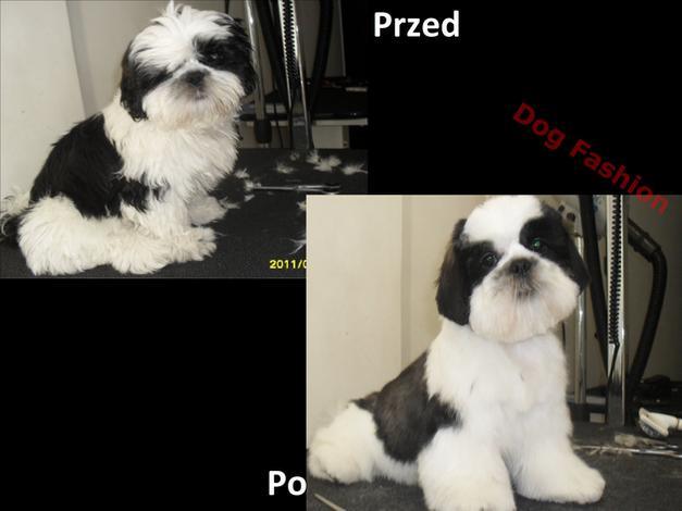 pielęgnacja psa - DOG FASHION Salon Pielęgn... zdjęcie 4