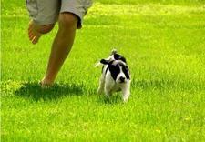 szkolenie psów warszawa - Akademia Psorbona zdjęcie 3