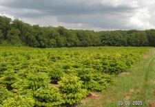 usługi leśne - Zakład Kształtowania i Pi... zdjęcie 32