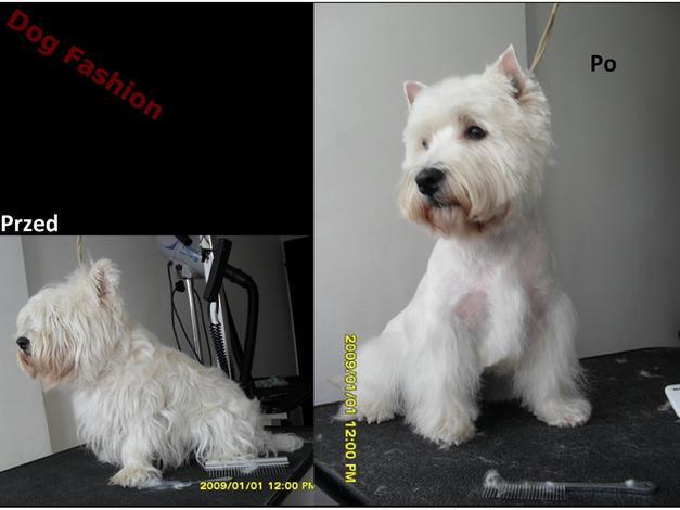 trymowanie - DOG FASHION Salon Pielęgn... zdjęcie 6