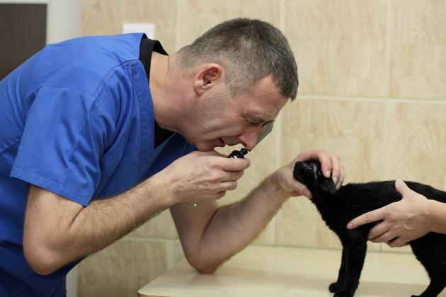 szczepienie psów - Klinika Weterynaryjna Kor... zdjęcie 6