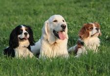 kursy dla psów warszawa - Akademia Psorbona zdjęcie 9