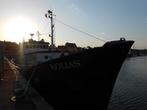 Wędkarstwo morskie - Kolias. Rejsy na dorsze kutrem