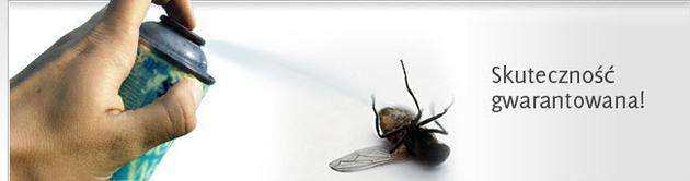 szerszeni - Insekt FUH zdjęcie 3