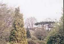 wycinka drzew trudnych - OGRÓD-SYSTEM Zakład Konse... zdjęcie 1