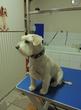 Salon Fryzjerski dla psów i kotów Coco