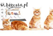 zoologia - BigCATs zdjęcie 1