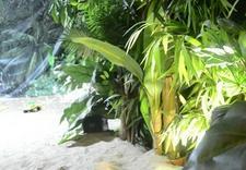 piniata - Ecotropicana - urodziny d... zdjęcie 7