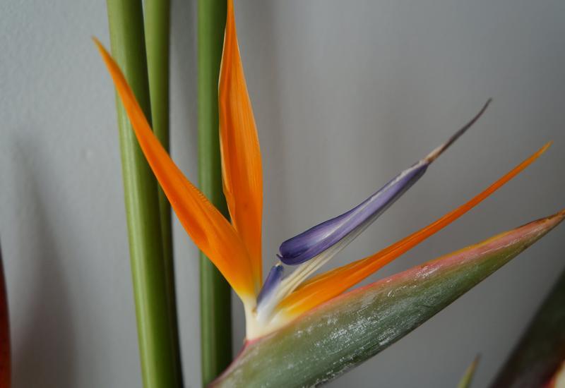 sprzedaż kwiatów - Green Team - Import Kwiat... zdjęcie 8