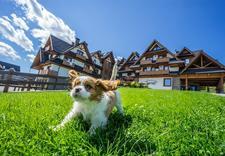 sale konferencyjne zakopane - Zawrat Ski Resort & SPA *... zdjęcie 21