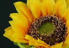 sztuczne storczyki - Faktor - Kwiaty i Rośliny... zdjęcie 4
